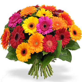 Valentijnsdag mijn favoriete bloemen ann ages gracefully for Gerbera in de tuin