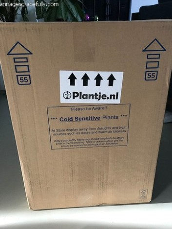 Plantjes box (1)