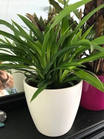 Plantjes box (2)